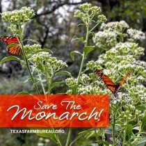 Agriculture can save the Monarch butterfly