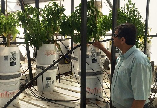 NMSU Researchers to Receive National Water and Energy Conservation Award