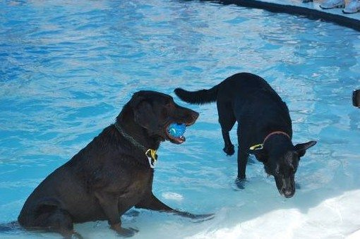 Dogs and their humans have one last day at the pool