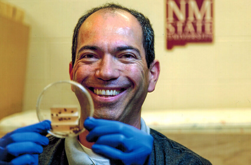 NMSU Researcher: Some Bed Bugs show Resistance to Neonicotinoid Insecticides