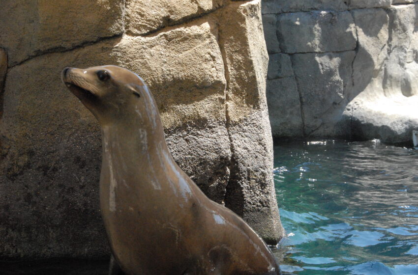 El Paso Zoo mourns the Death of Sushi, the Sea Lion