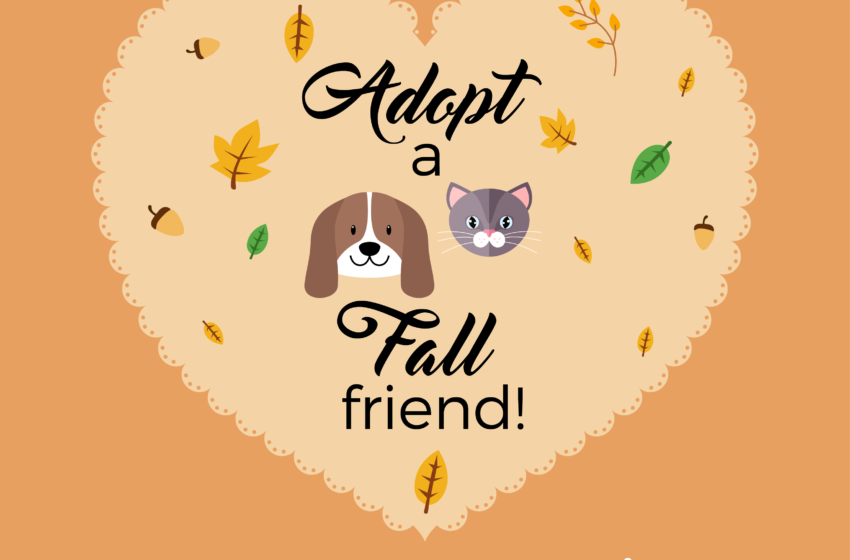 """Animal Services Announces """"Fall Friend"""" Pet Adoptions for October"""