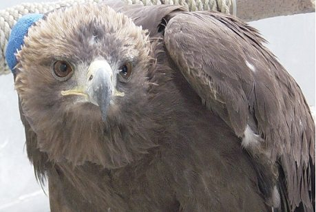 El Paso Zoo Celebrates Save the Eagles Day