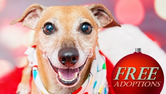 """Animal Services """"Home for the Pawlidays"""" Adoptions Starts Friday"""