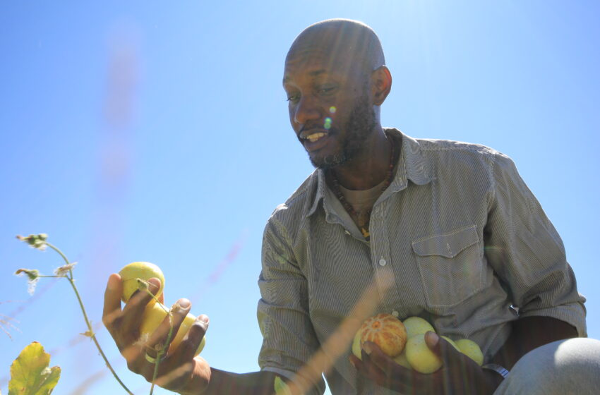 Green in the Desert: Local Farmer Captures Carbon to Grow Food, Feed Community