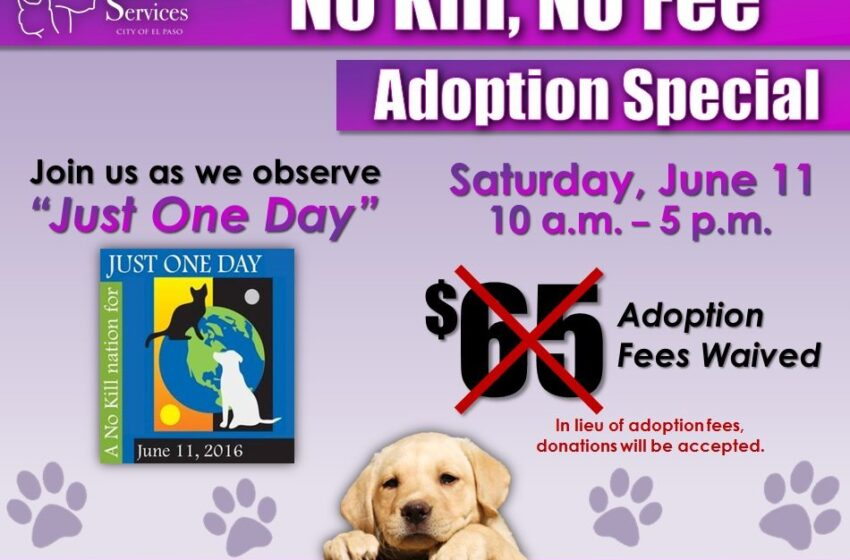 "Animal Services Aims to Save more Lives in Honor of ""Just One Day"" Campaign"