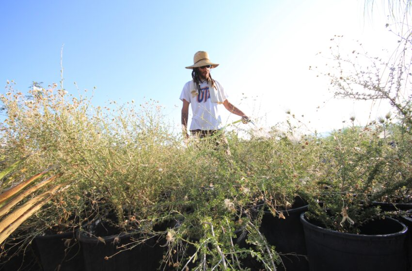 Green in the Desert: Local Biologist Taps Rainwater to Restore River Flow, Defend Against Drought