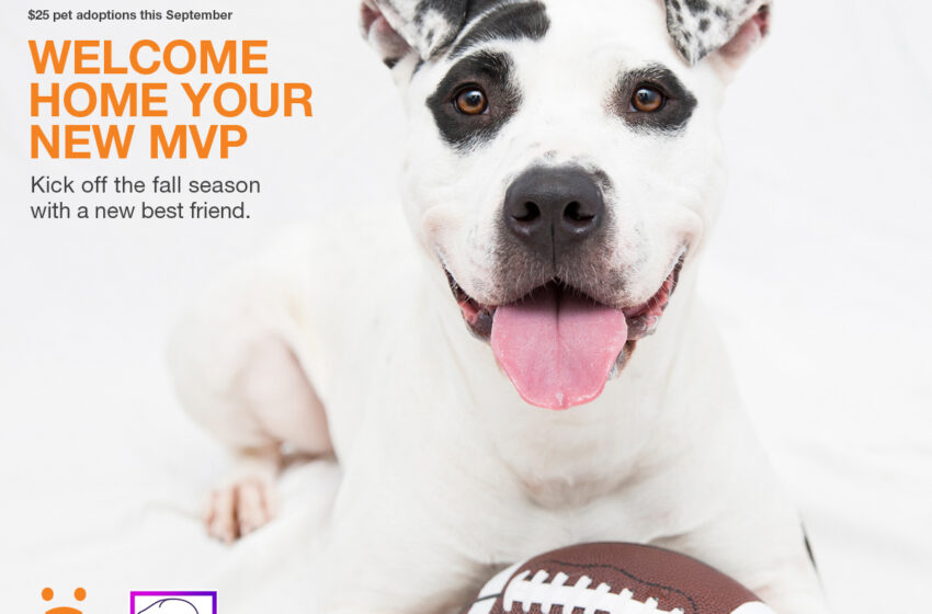 "Animal Services Kicks Off ""Welcome Home Your New MVP"" Adoption Special"