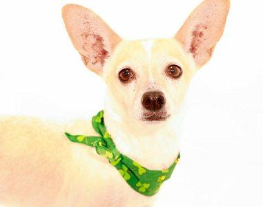 Animal Services Pet of the Week: Meet Elfie!
