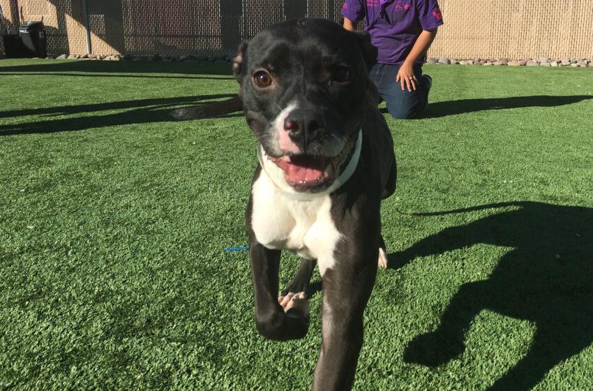 Animal Services Pet of the Week: Meet Kira!