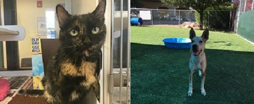 Animal Services Pets of the Week: Meet Lucy and Xena!
