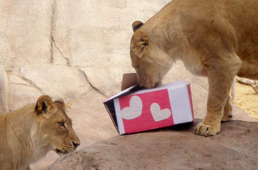 El Paso Zoo Animals to Receive Special Valentine's Day Treats