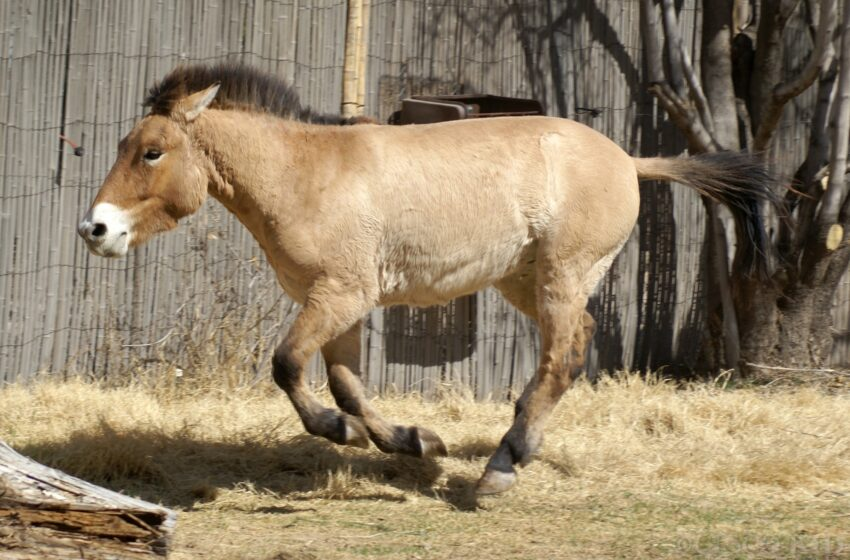 El Paso Zoo to Receive Animal from Smithsonian's National Zoo