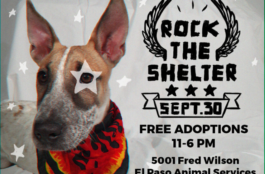 """Animal Services Offering Free Adoptions Saturday with """"Rock the Shelter"""" Event"""