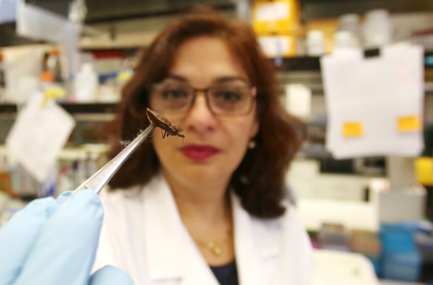 UTEP Scientists Awarded Patent for Chagas Disease Vaccine