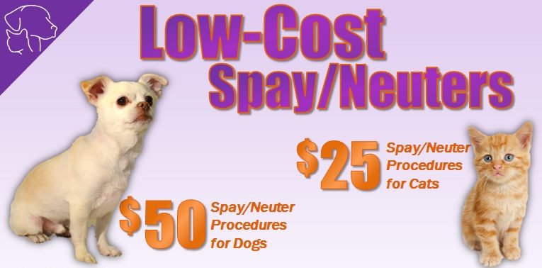 Animal Services Offering 200+ Low-Cost Spay/Neuter Procedures in September