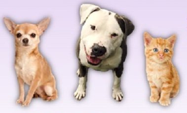 "Animal Services to Address Unwanted Litters with Low-cost ""Spay, Neuter, Love"" Event"