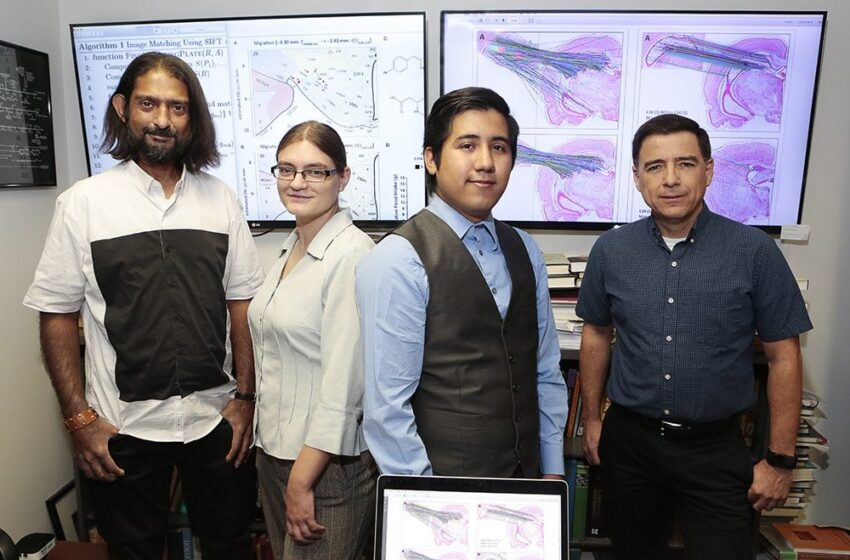 UTEP Professors, Students Introduce Method to Migrate Brain Mapping Data Across Different Atlases