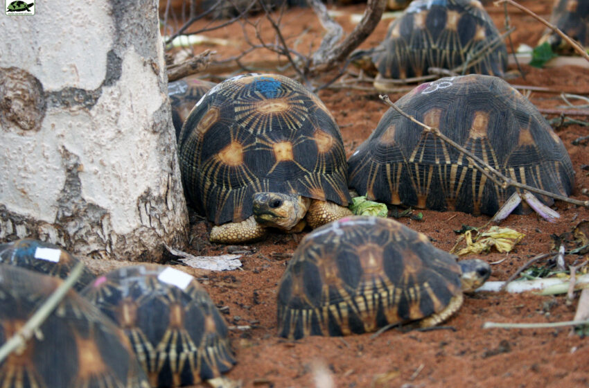 El Paso Zoo Helping Rescue Nearly 10,000 Tortoises