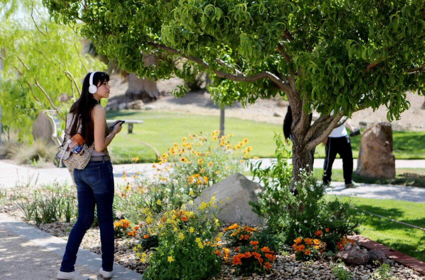 UTEP Earns Tree Certification for Sustainability