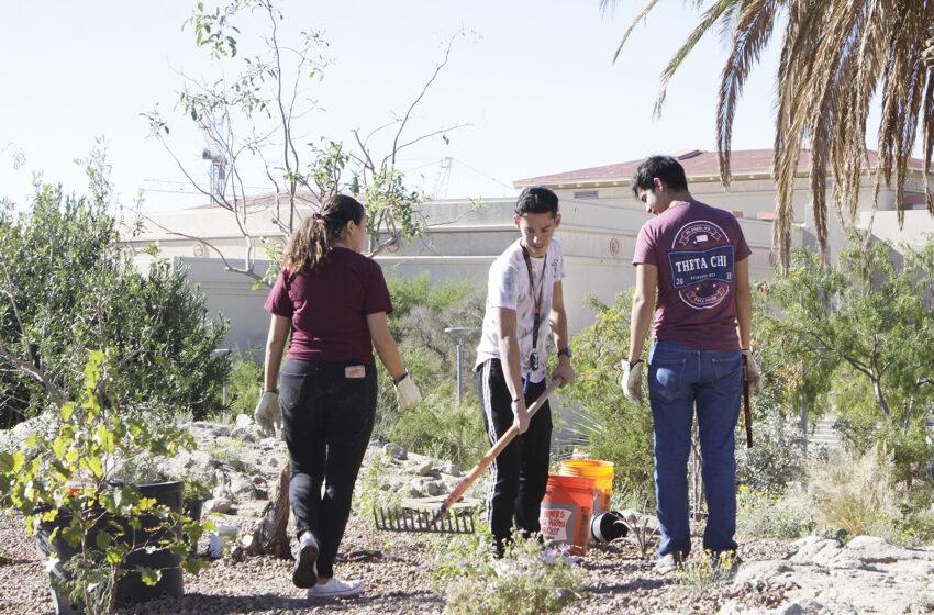 UTEP Receives Tree Campus USA Designation for Third Straight Year