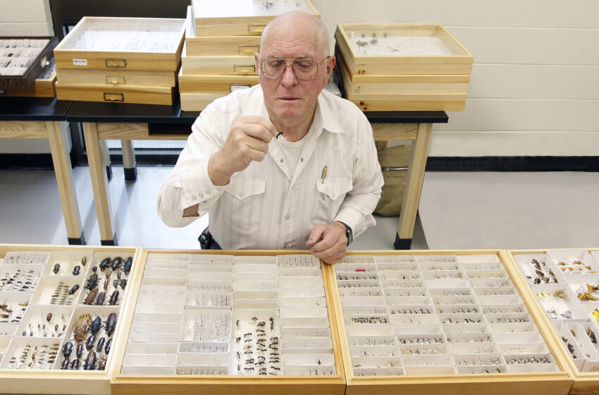 National Science Foundation Funds UTEP Historical Insect Project