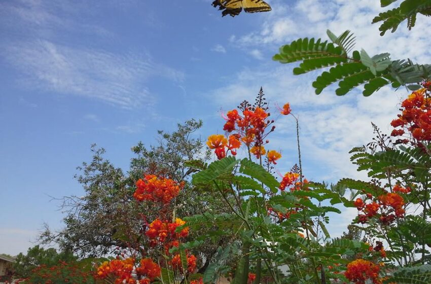 Group plans meeting to promote native plants in El Paso