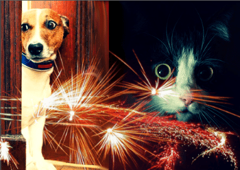 Animal Services: Keep Pets Indoors During July Fourth Holiday