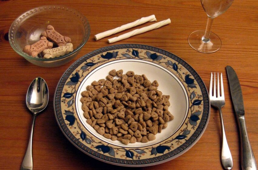 Op-Ed: Eating Your Own Dog Food