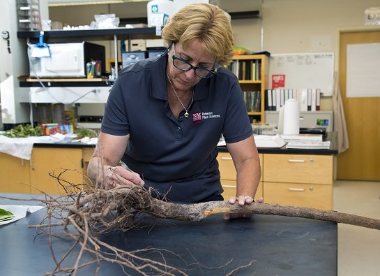 NMSU Plant Diagnostic Clinic Receives National Accreditation