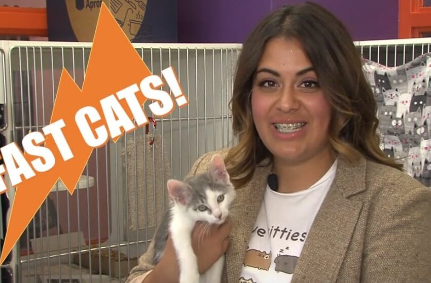 """Animal Services Holding """"Certified Cat Sale;"""" Free Cat Adoptions Entire Month of June"""