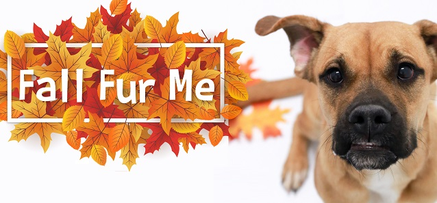 """""""Fall Fur Me"""" Adoption Special to Connect Families with Pets for the Holidays"""