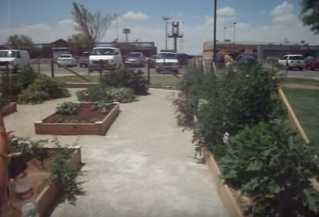 Free Gardening Workshops for Community start Friday