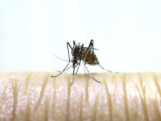 Mosquitoes that Can Carry Zika Spread to Sierra County