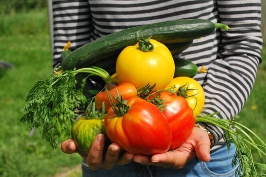 Study: Urban Agriculture Good for Students, Community Health