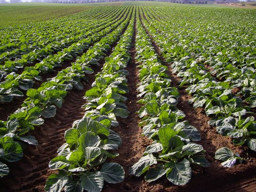 NM Groups Press for Scrutiny of Agribusiness Mega Mergers