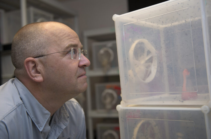 NMSU Research on Homemade Mosquito Repellents Finds Interesting Alternatives