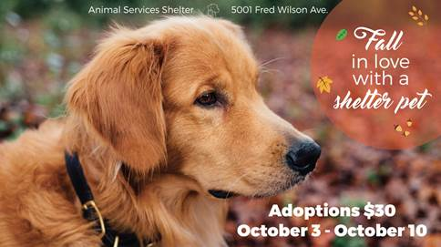 "Animal Services ""Fall in Love"" Special for Pet Adoption"