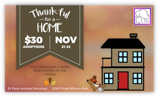 "Animal Services Extends Reduced Adoptions with ""Thankful for a Home"" Promotion"