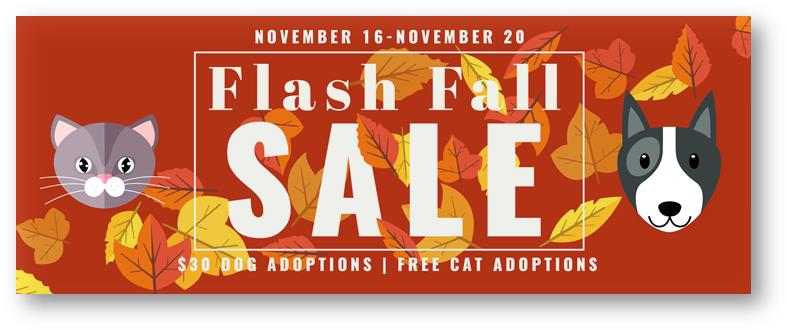 """Animal Services Shelter at Capacity, Prompting """"Flash Fall Sale"""""""