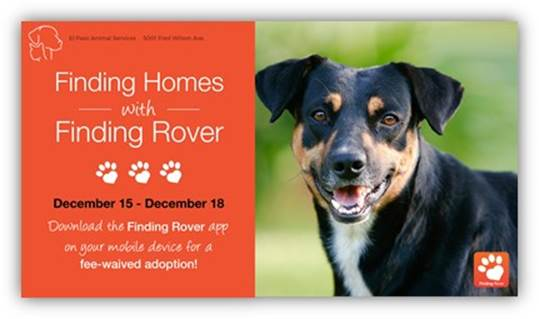 Animal Services Partners with Finding Rover App to Help Reunite Lost Pets, Promote Adoption
