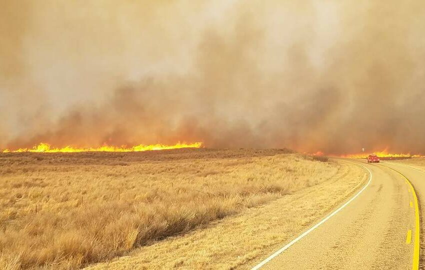 Texas Ag Commissioner Calls on Texans to Help Neighbors in Panhandle Impacted by Wildfires