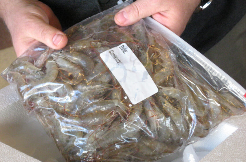 NM-based shrimp company to earn national exposure during Fish 2.0 competition