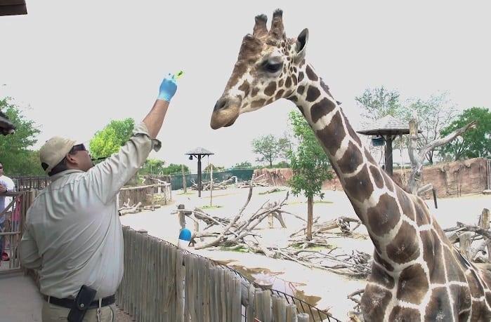 Video+Story: El Paso Zoo Celebrates National Zoo Keeper Week