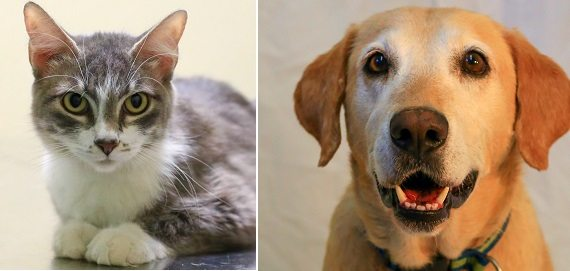 Pets of the Week Sadie and Elliot ready for New Homes