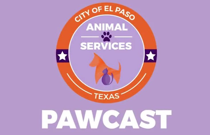 Video: El Paso Animal Services Pawcast for September 2017
