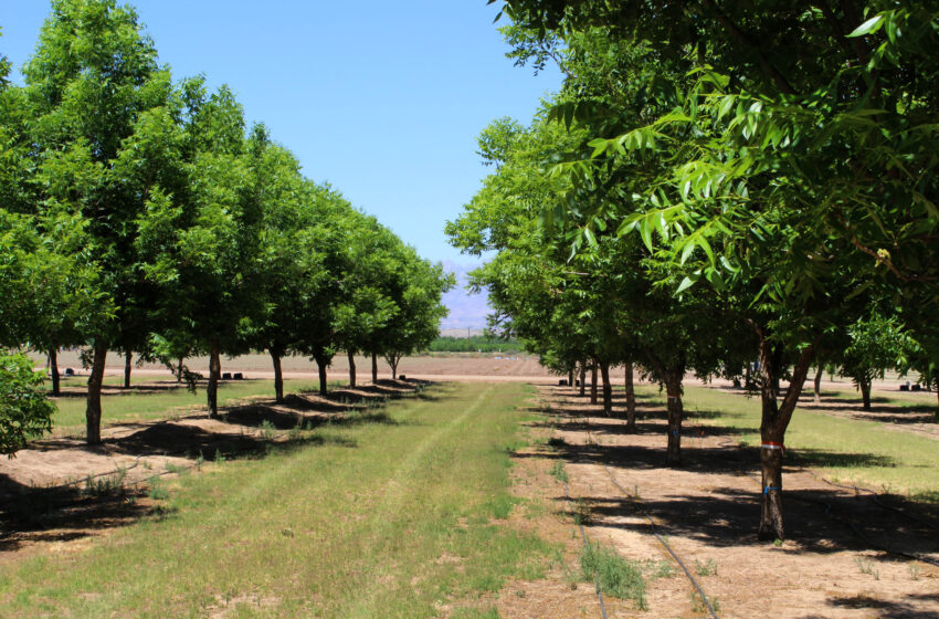 Sustainable Agriculture Field Day to be Held at NMSU