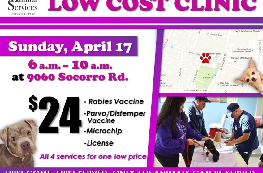 Animal Services Sponsors Low Cost Clinic at Socorro Road Facility