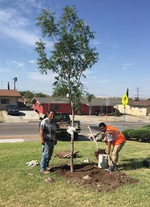 New tree honoring slain constable, coach planted