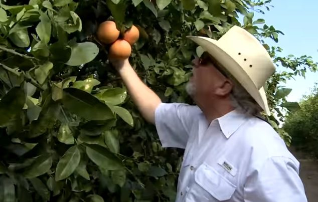 Texas Citrus: From the Groves to Kitchen Table